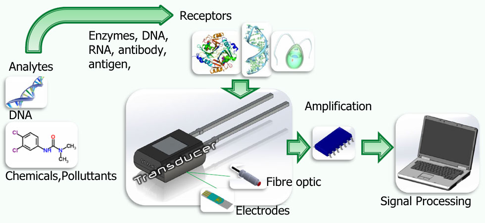 What is a biosensor?